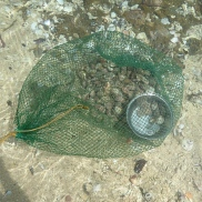 Fresh Caught and Waiting in the shallows
